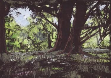 Forest Glade, Killarney
