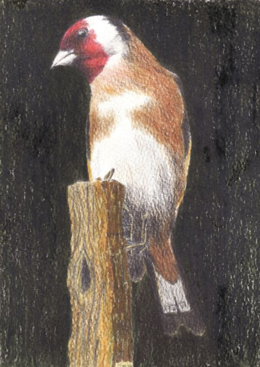 Micheal O Muirthile - Goldfinch