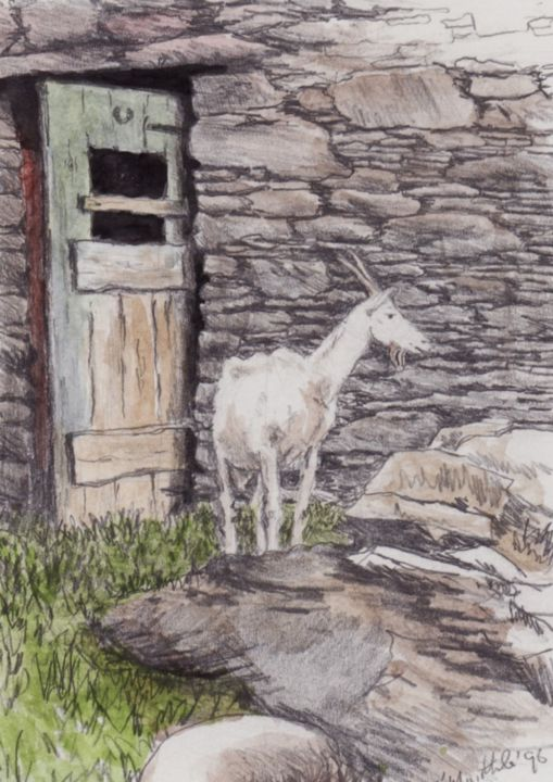 Micheal O Muirthile - Goat at Carraig Farm near Gougane Barra